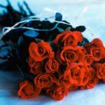 1342552277-roze.jpg